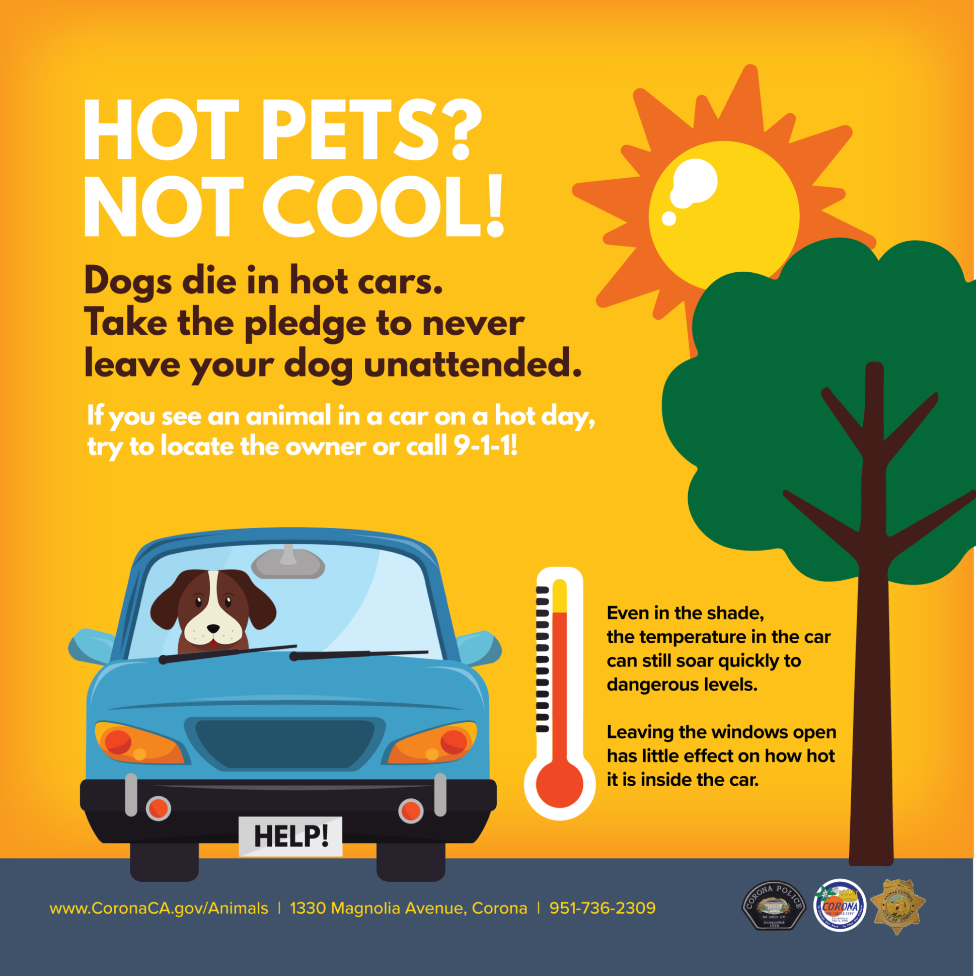 Beating The Heat Is Extra Tough For Dogs Because They Can Only Cool Themselves By Panting