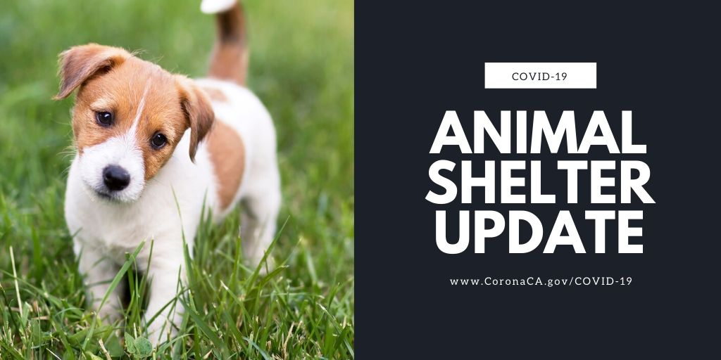 Animal Shelter Update
